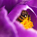 Pollination Party Of One by Vicki Jauron