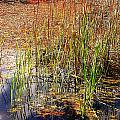 Pond And Rushes by Mary Lane