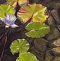 Pond Flower by Susan Hanna