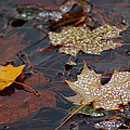 Pond Leaf Dew Drops by LeeAnn McLaneGoetz McLaneGoetzStudioLLCcom