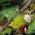 Pond Lumens by Trish Hale