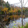 Pond On Limekiln Road by David Patterson