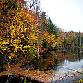 Pond On Limekiln Road II by David Patterson