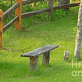 Pondering Bench by Michael Carrothers