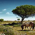 Pony Pasturing by Carlos Caetano