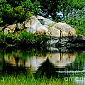 Pool In Marsh At Mystic Ct by Lizi Beard-Ward