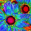 Pop Art Daisies 2 by Amy Vangsgard