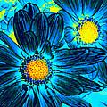 Pop Art Daisies 7 by Amy Vangsgard