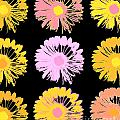 Pop Art Floral I -daisies -ii by Ricki Mountain