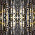 Poplar Cathedral by Ed Kelley