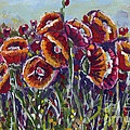 Poppies In My Field by Dinah Anaya