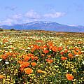 Poppies Over The Mountain by Peter Tellone