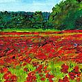 Poppy Fields Tuscany by Jackie Sherwood
