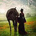 Poppy In The Field  by Eugene James