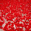 Poppy Meadow ... by Juergen Weiss