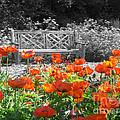 Poppy Seed Bench by Mary Mikawoz
