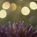 Porcupine by Trish Tritz