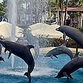 Porpoise Statues   Maui Hawaii by Jon Berghoff