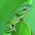Portrait In Green by Jeff R Clow