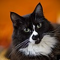Portrait Of A Cat by David DuChemin