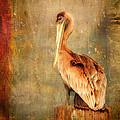 Portrait Of A Pelican by Karen Lynch