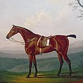 Portrait Of A Race Horse by Daniel Clowes