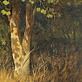 Portrait Of A Tree Trunk by Mandar Marathe
