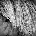 Portrait Of A Wild Horse by Bob Decker