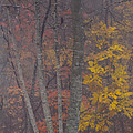 Portrait Of Autumn by Rob Travis