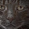 Portrait Of Cutio The Cat by Randall Nyhof