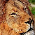 Portrait Of The King by Bill Dodsworth