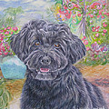 Portuguese Water Dog by Gail Dolphin