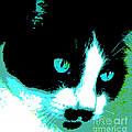 Poster Kitty by Elinor Mavor