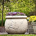 Pots Of Pansies by Cheryl Davis