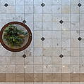 Potted Plant In Foyer Floor From Above by Will & Deni McIntyre