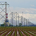 Power And Plants I  by Debbie Portwood