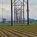 Power And Plants II by Debbie Portwood