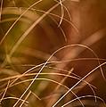 Prairie Grasses Number 4 by Steve Gadomski