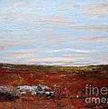 Prairie by Vesna Antic