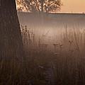 Prairie Pre Dawn by Steve Gadomski