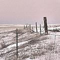 Prairie Puzzle by William Fields
