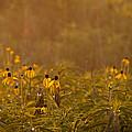 Prairie Wildflowers by Steve Gadomski