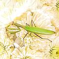 Praying Mantis On A Flower Boquet by L J Oakes