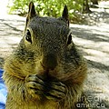 Praying Nuts by DJ Laughlin
