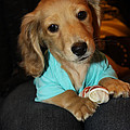 Precious Puppy by Diana Haronis