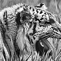Predator by Naman Imagery
