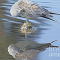Preening My Feathers by Deborah Benoit