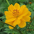 Pretty And Lovely In Yellow by Tina M Wenger