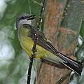 Pretty Bird  by Vickie Treadway