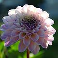 Pretty Flower by Steve McKinzie
